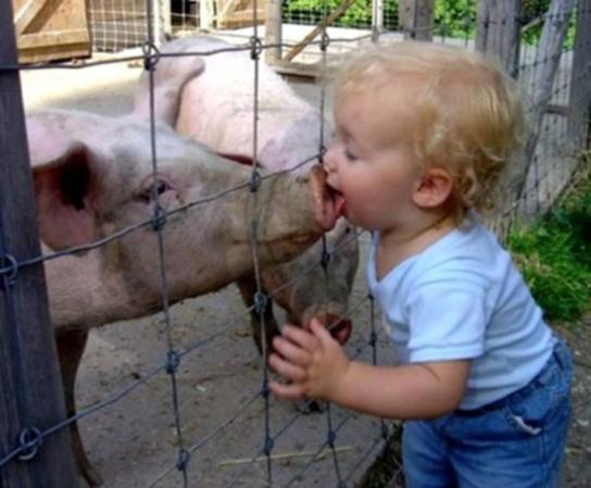 swineflu-