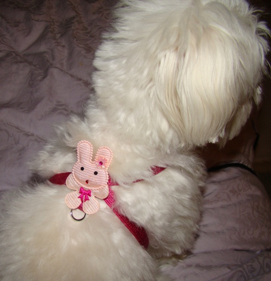 Pink Bunny Harness