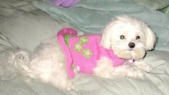PINK GREEN DOG SWEATER DRESS